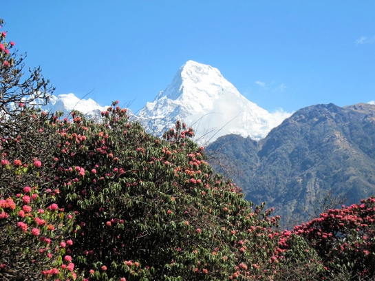 Annapurna South (7219m)