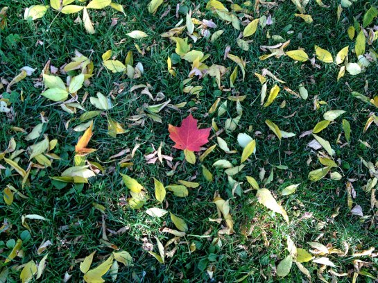 Maple Leave_1