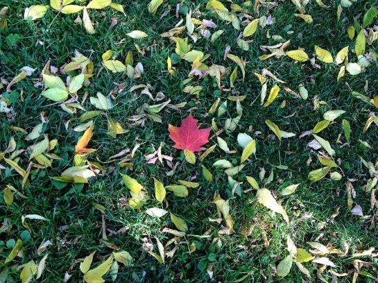 Maple Leave_1